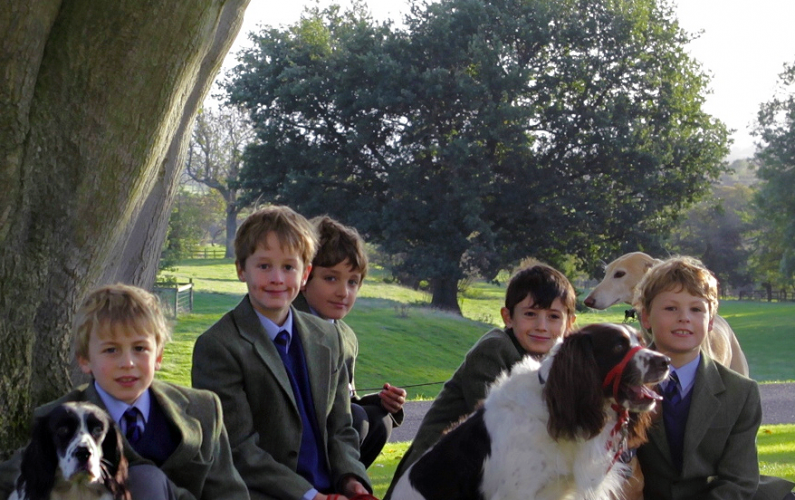 British Boarding School dogs